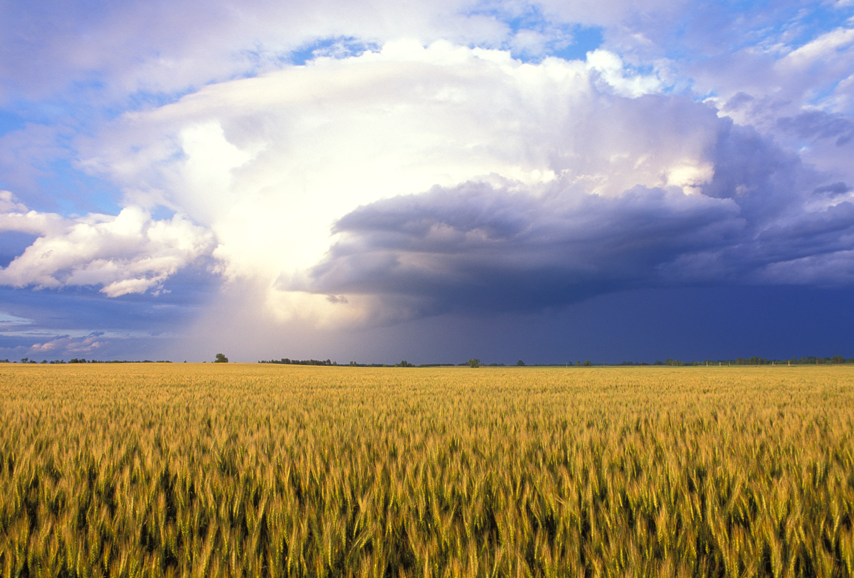Wheat field and storm in the Red River Valley